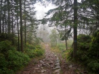 norský les, sweet melange