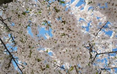 jaro v Oslu