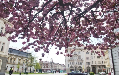 rozkvetlé stromy